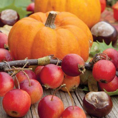 Autumn Pumpkin Luncheon Napkins
