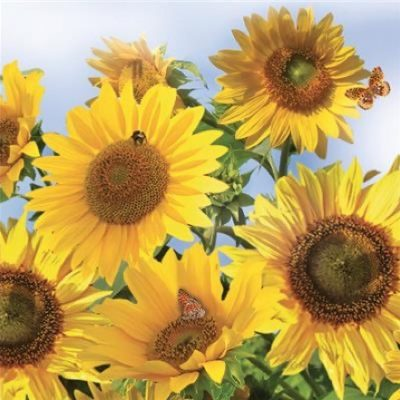 Sunflowers in the Sky Luncheon Napkins