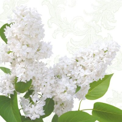 White Lilac Luncheon Napkins