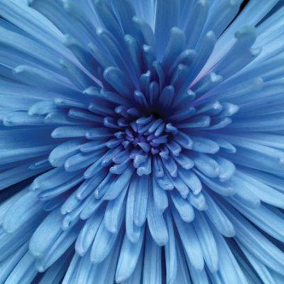 Chrysanthemum Luncheon Napkins