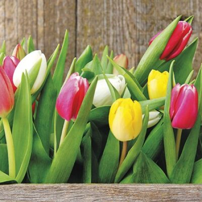 Colorful Tulips Luncheon Napkins