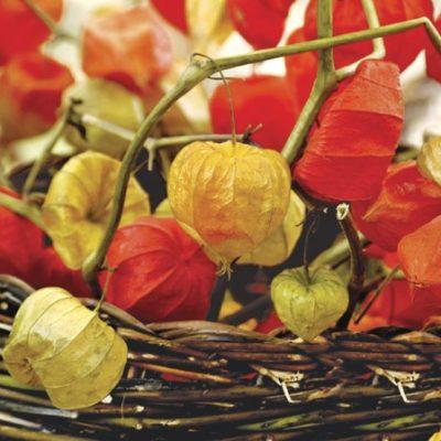 Physalis of Autumn Luncheon Napkins